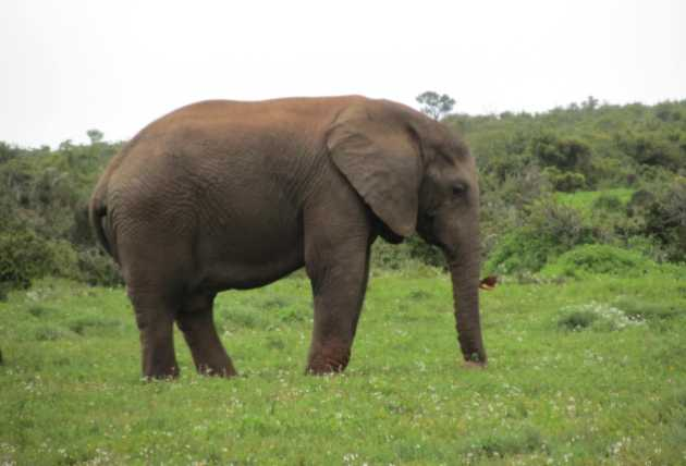 Addo Elephant National Park Model.PageTitle