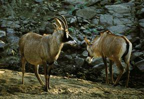 Mapungubwe National Park Accommodation