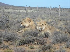 Karoo National Park Accommodation