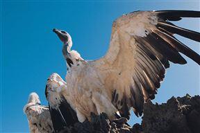 Marakele National Park Accommodation