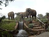 Hartbeespoort Dam Safari