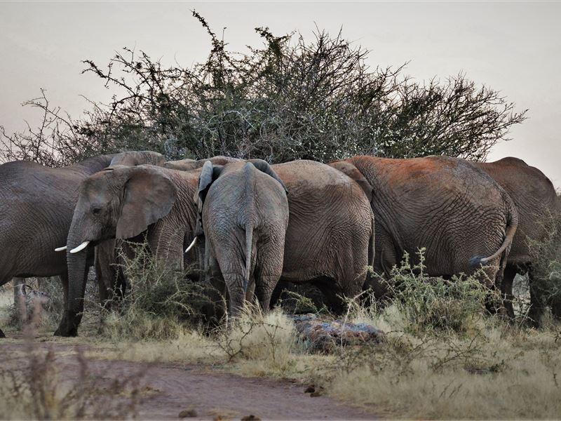 elephant lodge building namniba pdf