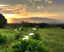 Just one of the lovely views at Oudekloof Wine Estate & Guest House
