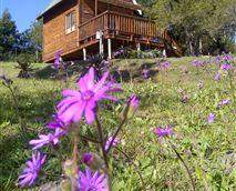Indlu cabin © A Stone