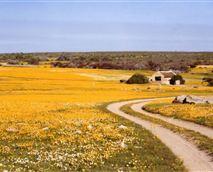 Flower season at Papkuilsfontein