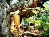 Chiefs Island Lodge