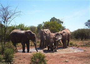 Dinokeng Game Reserve