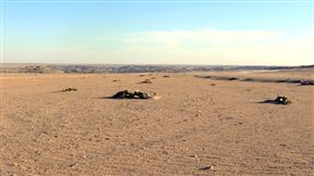 The Namib plains of the endemic Welwitschia mirabilis
