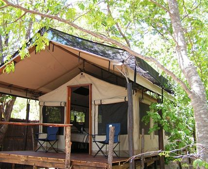 Tents are built on wooden decks and shaded by Zambezi teak trees.
