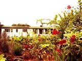 Central Malawi Bed and Breakfast