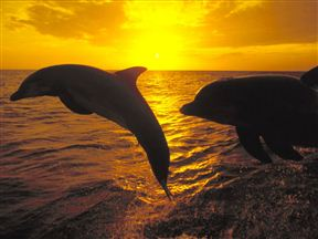 Whale watching, dolphine watching, seals, birds and many more