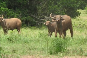 Shimba Hills National Reserve game