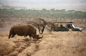 Lewa Wildlife Conservancy Accommodation