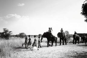 Adventures With Elephants