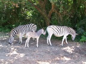 Amatikulu Nature Reserve