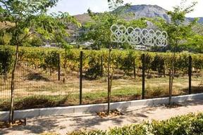 Gallery88 vineyards