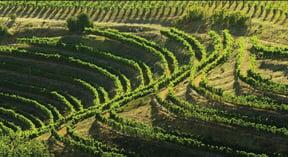 Eagles' Nest vineyards