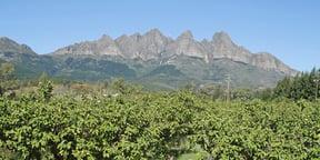 De Compagnie Wine Estate