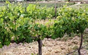 Wine Tours of Hermanus