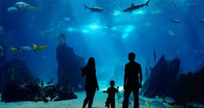 East London Aquarium