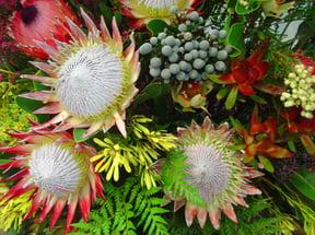 Cape Floral Kingdom, flowers and plants, Hermanus