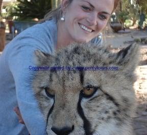 Cheetah at Safari park near Hermanus