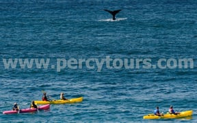 Kayaking with the Whales in Hermanus