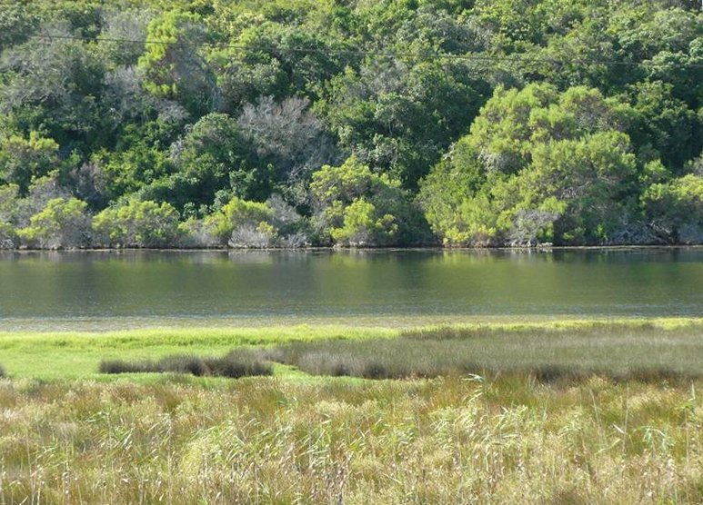 The Island, Sedgefield