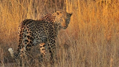 Wildlife in Southern Africa