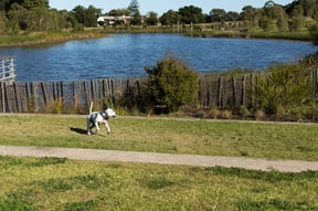Having  ball of a time in Sydney Park