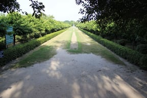 Entrance to Mehtab Bagh