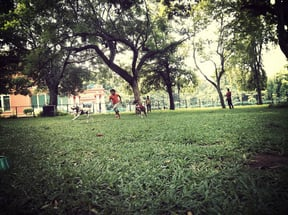 Cubbon Park Library Playground