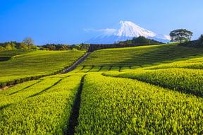 Shizuoka Accommodation