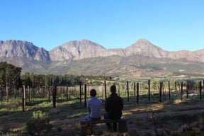 Vineyards And Mountains At Lalapanzi Lodge