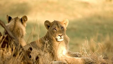 Kruger National Park Info