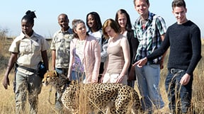 Discover amazing facts about these majestic animals as you walk and interact with Cheetahs while having your photos taken by a professional photographer. The hour long Cheetah Walk takes place under the careful supervision of two of our experienced and knowledgeable guides. A truly memorable experience. Cheetah Walks depart 09:00 and 16:00.