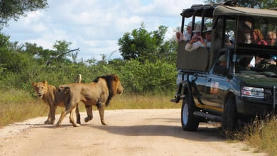 2 Night Classic Kruger Safari Package | Accommodation Skukuza