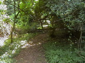 Indigenous Forest Trail