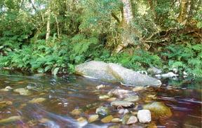 jubilee creek 2