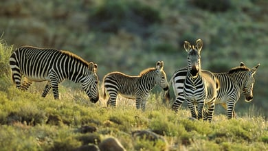 Things to do in Karoo National Park