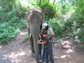 Get a chance to touch from the tip of the trunk to the tail!