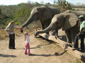 Feeding the Elephants!