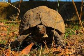 Tortoise in Reptile Park