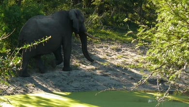 Things to do in Tembe Elephant Park