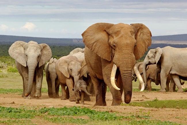 Addo Elephant Park, Eastern cape