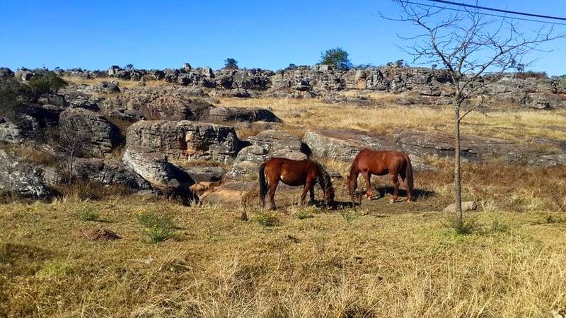 Wild horses of Kaapsehoop
