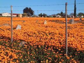 Loeriesfontein Accommodation