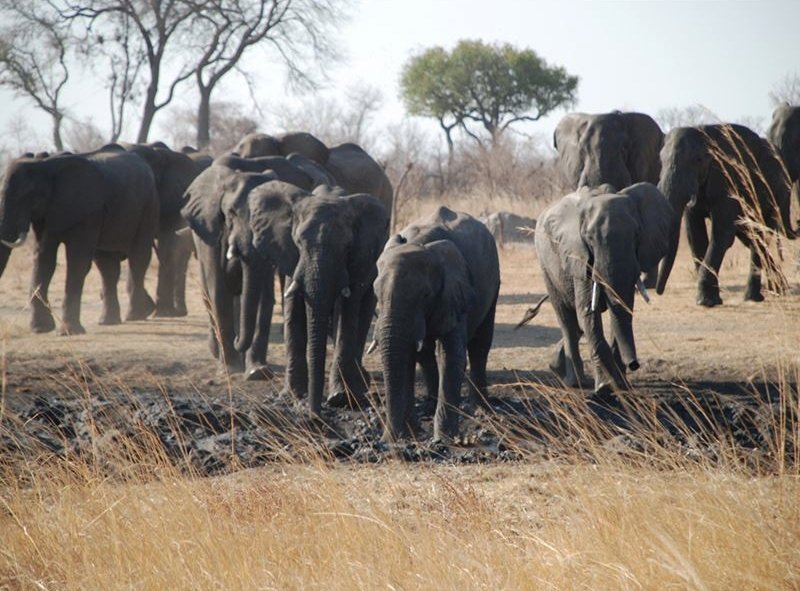 Elephants of Hwange National Park