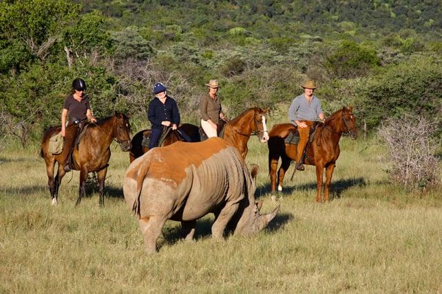Horse riding amongst wildlife, Vaalwater