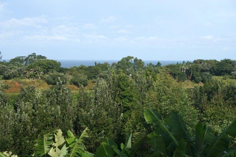 Leisure Bay coastal forest